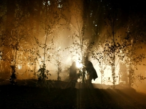forest-night-28-10-2014-2